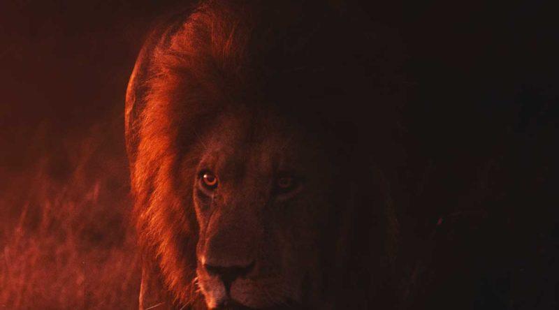 Leão de Judá